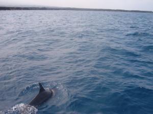 Un dauphin respire...