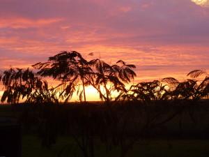 lever de soleil sur les albizias en Vendée.